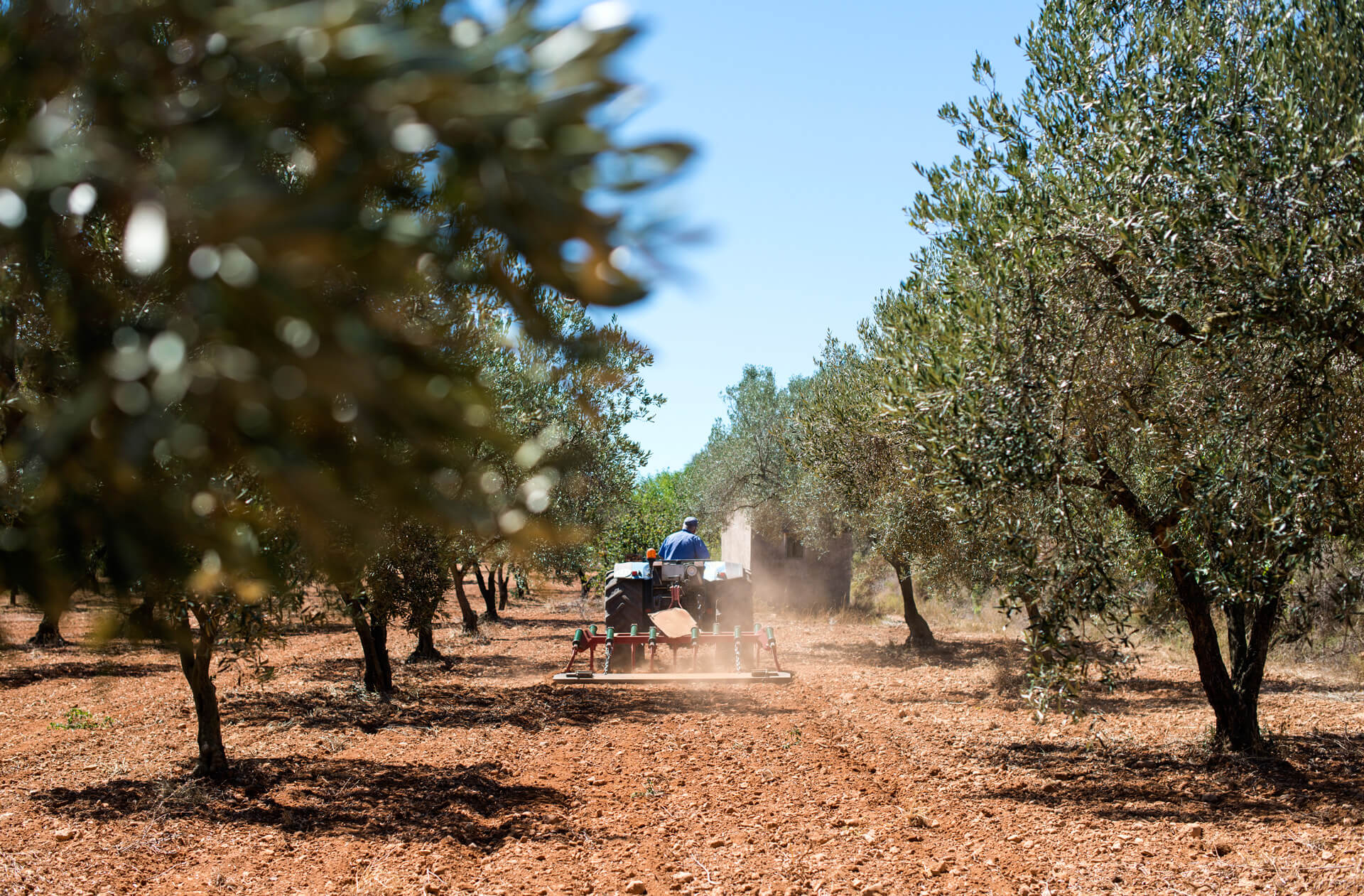 The land of olive trees – Messenia